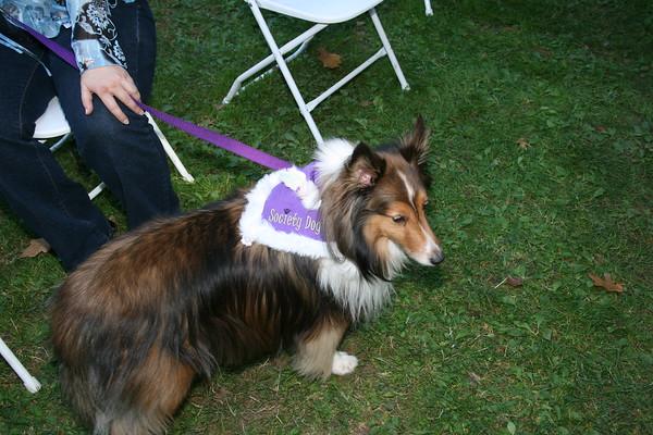 Society Dog - Blessings at the Park