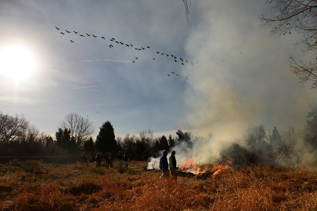 . DENVER, CO. - MARCH 07:  Canadian geese fly over a controlled burn at Denver Botanic Gardens, March, 07, 2013. Fires are a natural part of the plains ecology and help balance the diversity of species. The burn will aid in the germination and growth of different species in the garden. (Photo By RJ Sangosti/The Denver Post)