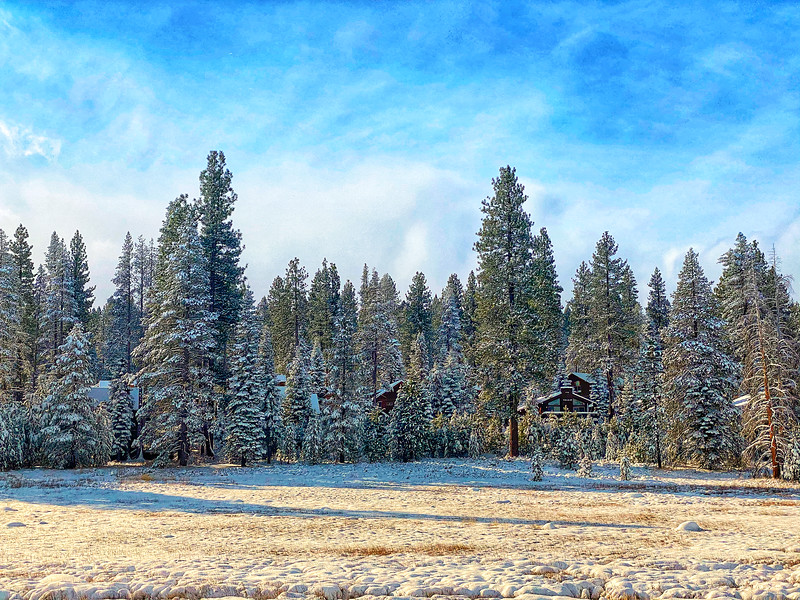 Snow Covered Trees and Cabins, Truckee California