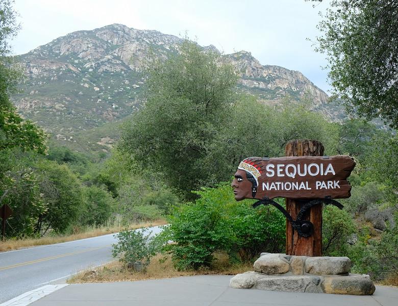 California Day 6 Sequoia 05-30-2017 2.JPG
