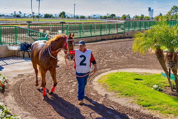 Turf Paradise Phoenix Arizona Sweatshirt Giveaway 30 Nov 2019
