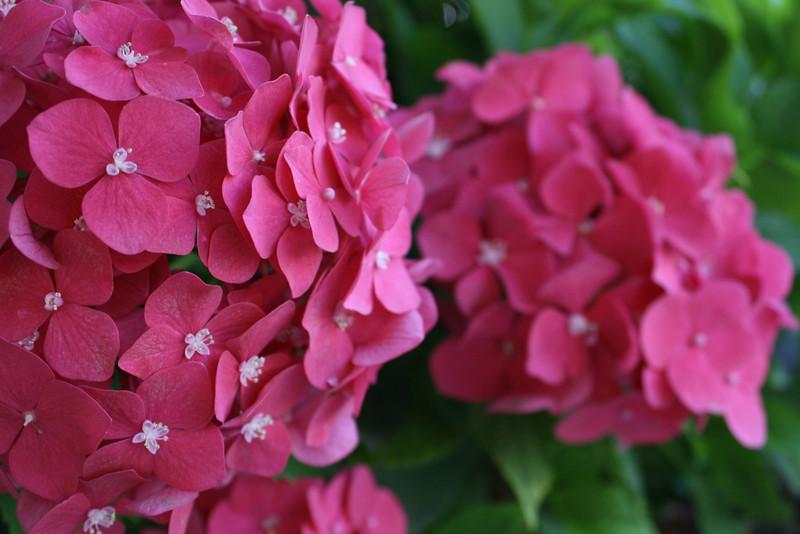 pink. duo.JPG