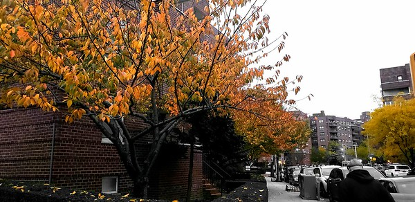 Autumn Leaves NYC Fall colors