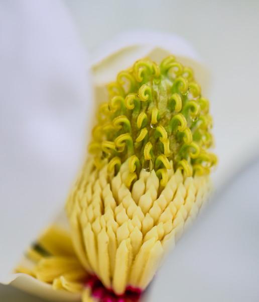 Magnolia 26