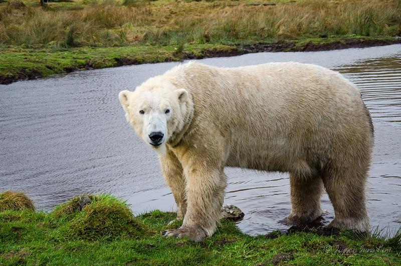 Scotland-Highland-8865.jpg