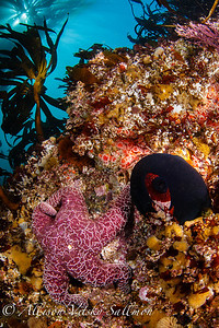 California: reef scenic