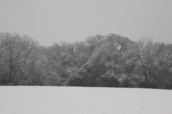Snow in the Park 2-11-10