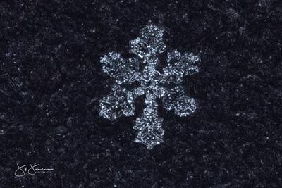 snowflakes-1341.jpg