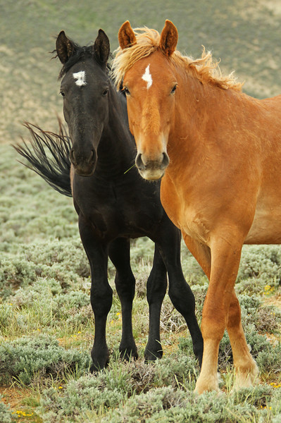 The Wild Horses of Pilot Butte - Green River, Wyoming - Mark Rasmussen - May/June 2014