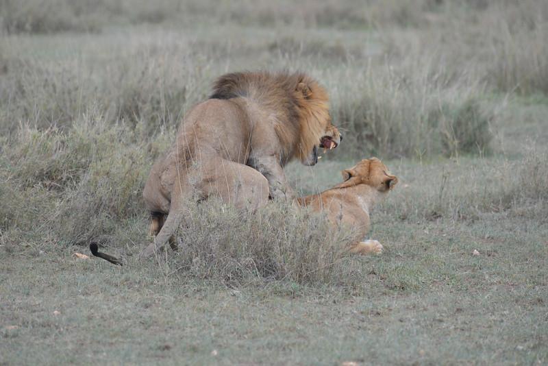 East Africa Safari 278.jpg