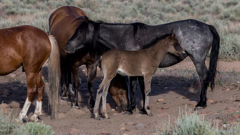 Wild Mustangs 2019-22.jpg