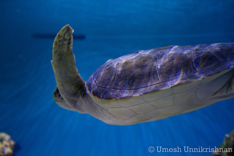Monterey Bay Aquarium 045.jpg