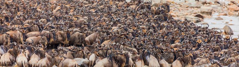 North_Serengeti-64.jpg