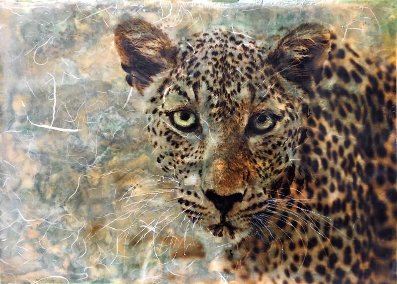 15_Helen McFadden_Leopard.jpg