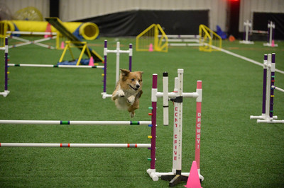 Burlington County Kennel Club AKC Agility Trial April 23-24