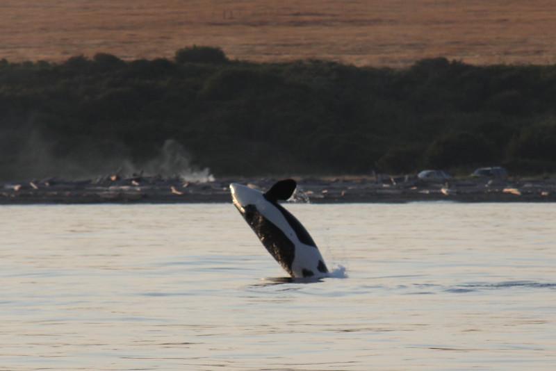 Alaska 2009-908.jpg
