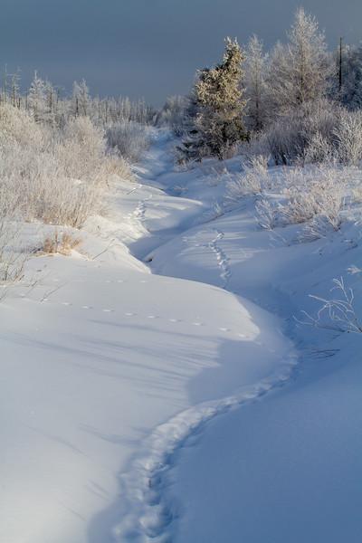 Hoar frost winter landscape CR133 Sax-Zim Bog MN  IMG_0017.jpg