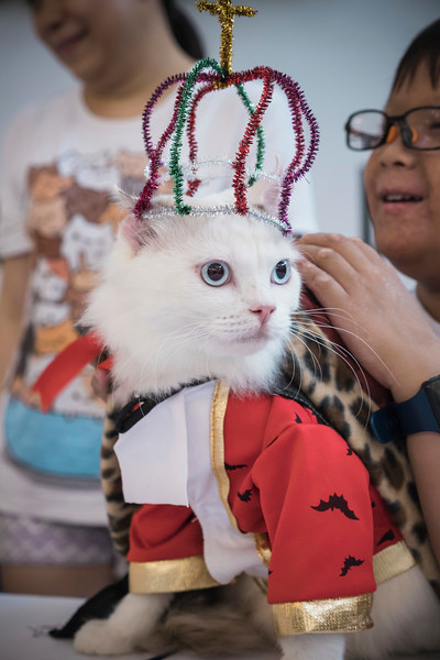 VividSnaps-The-Seletar-Mall-CAT-Dress-Up-Contest-033.jpg