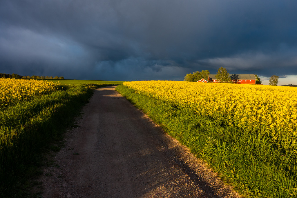 Low evening sun and dark clouds