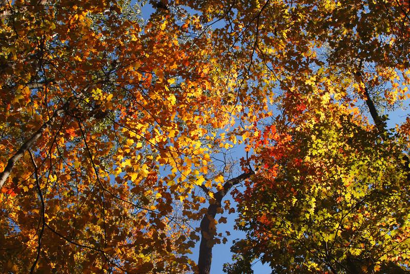 20081012-2008-10-1213-53-435844.jpg