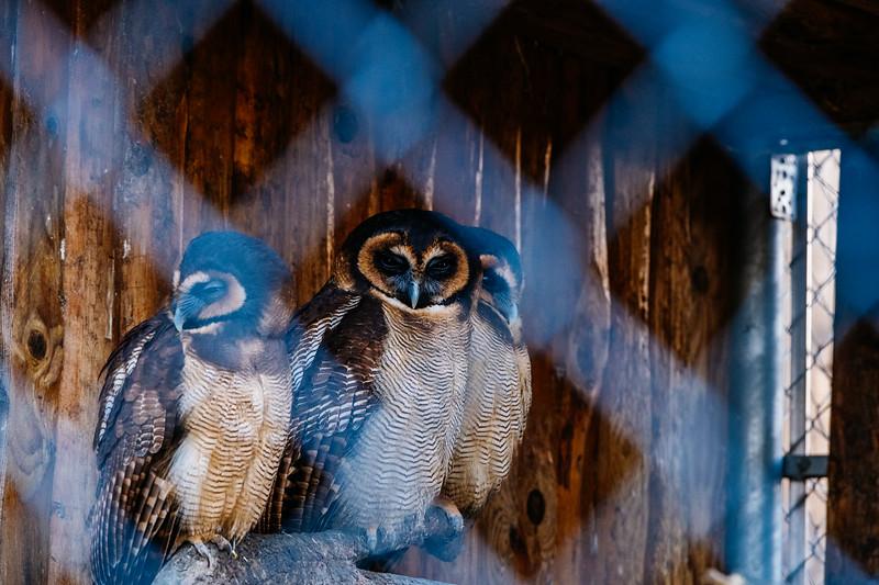Tonis Zoo-0394.jpg