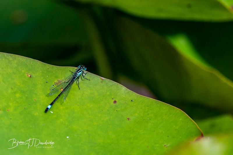 Garden_insectlife-0653.jpg