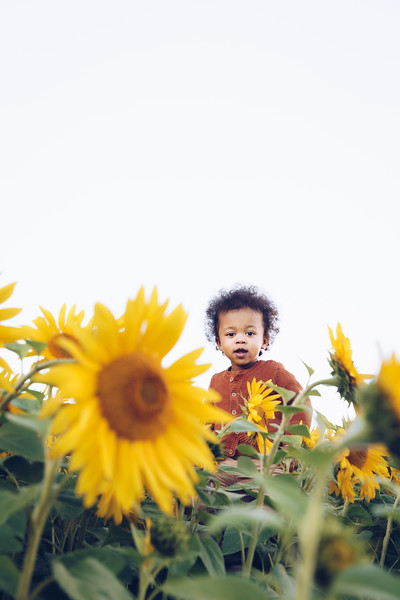 Sunflowers 20