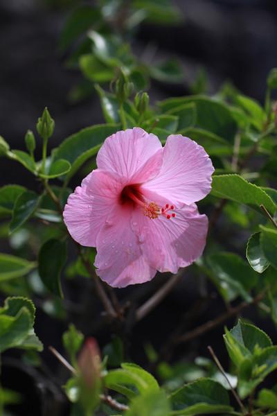 Kauai_D4_AM 175.jpg