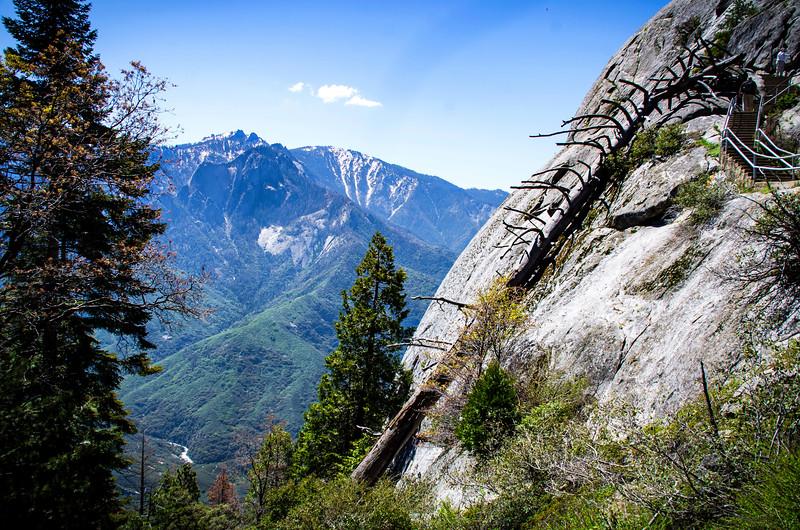 SequoiaHDR-11.jpg