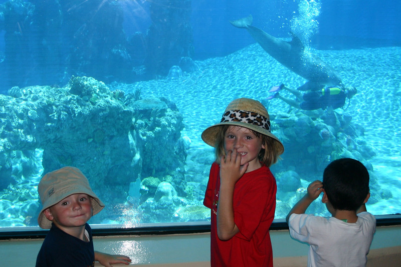 Christopher and Sydney really liked being able to see the dolphins underwater in the Dolphin Habitat at the Mirage Casino.