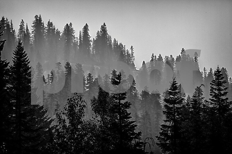 Smoke from the wildfires in the summer of 2012 hangs in the tree tops near Cayuse Pass on the east side of Mt. Rainier, WA. 0605