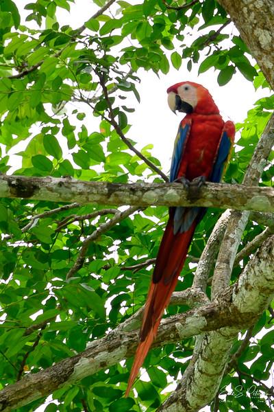 Costa Rica 20190627-9766.jpg