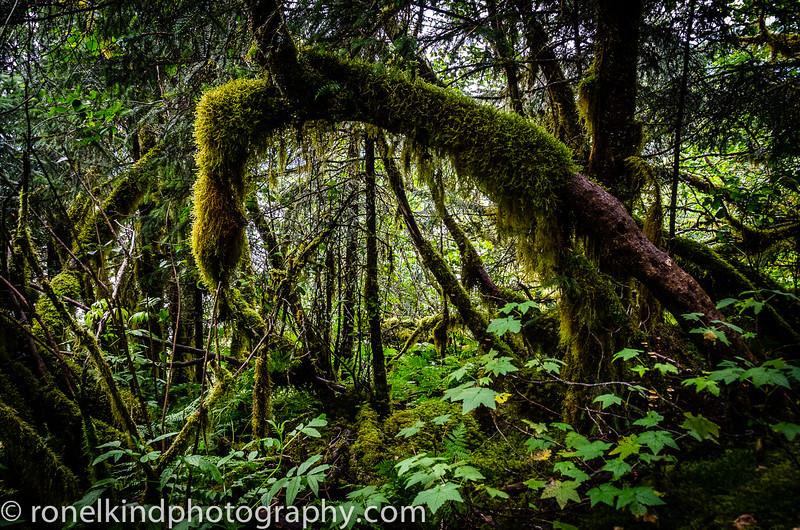Alaska-0141.jpg