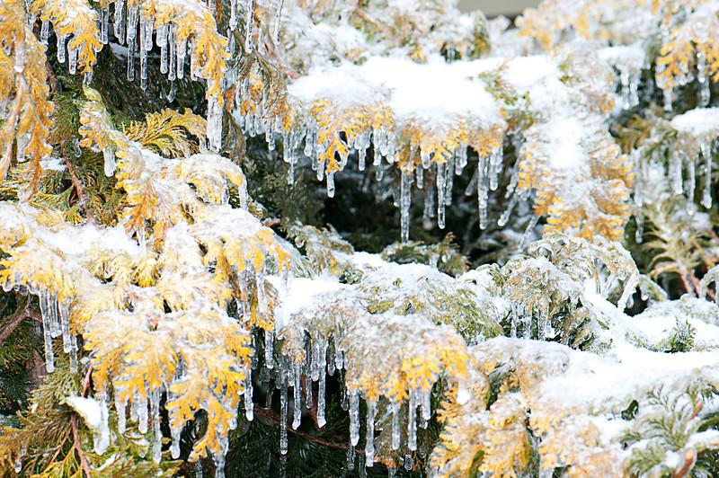 Ice_Storm14.jpg