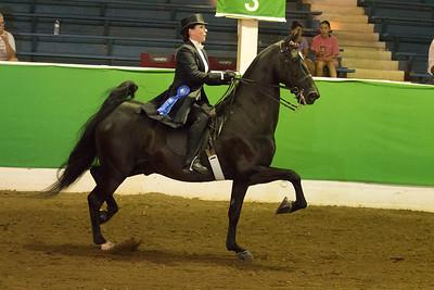63 - Reg. American Saddlebred 3 Gaited Open