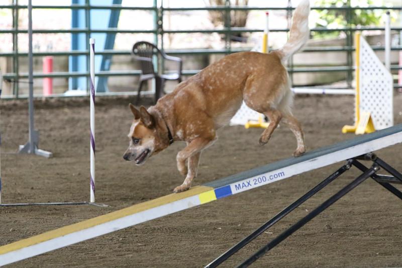 3-10-2019 Bloodhound-9717.jpg