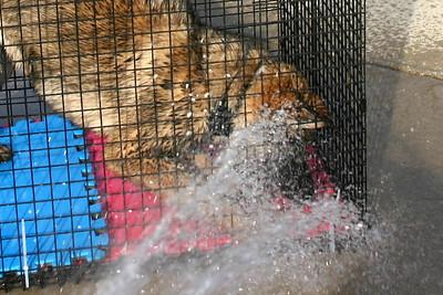 2010.3 Jake's first hosing!