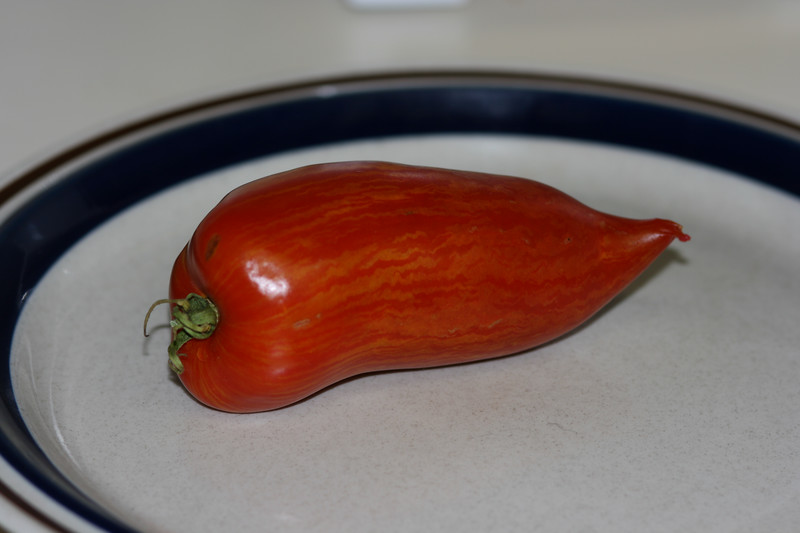 Wacky looking heirloom tomato.  It wants to be a pepper.