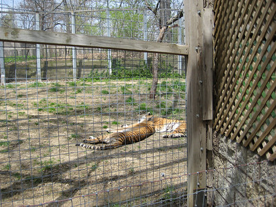 Glen Oak Zoo 2009