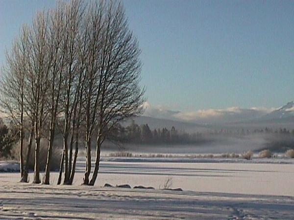 Winter aspens at lodge.jpg