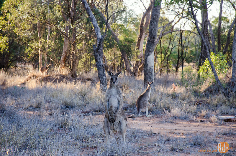 Australia-queensland-Charleville-outback-3974.jpg