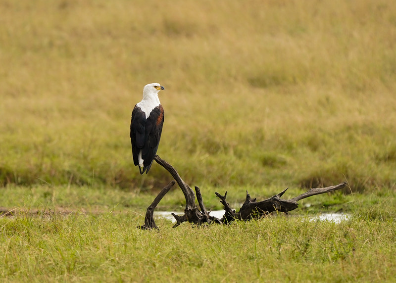 safari-2018-141.jpg