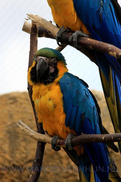Blijdorp Zoo rotterdam