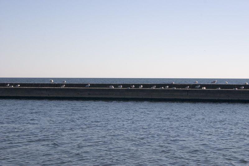 Seagulls on the Breakwater -- Toronto