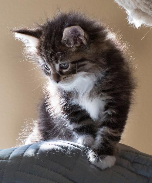 Kittens223.jpg