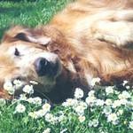Sweden, our first rescue, approx 1997