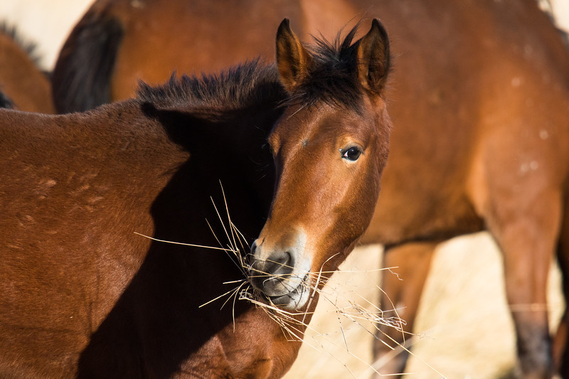 Nevada Mustangs Winter 2020-6.jpg