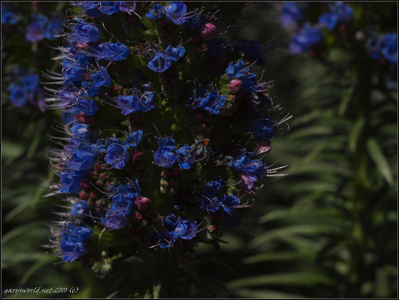 topanga flowers 2010 06.jpg