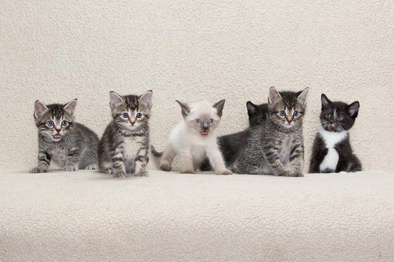 Abel kitties-3.jpg