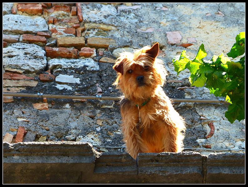 2015-05-Civitella-Lago-080.jpg